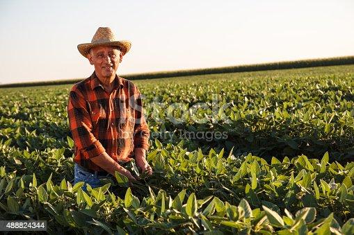 istock Senior farmer in a field examining crop 488824344