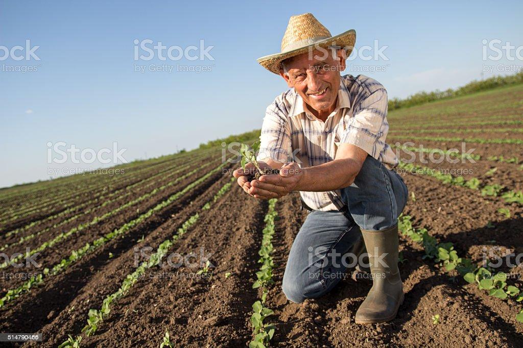 Sênior em um campo agrícola analisar corte - foto de acervo