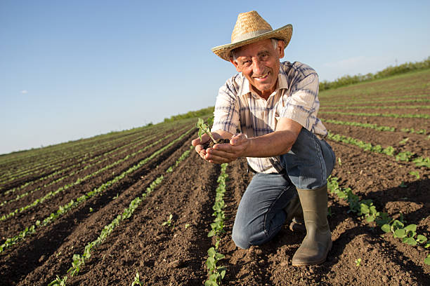 senior farmer in a field examining crop - organic farm stock photos and pictures