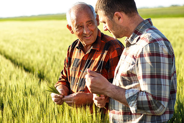 senior farmer in a field examining crop - farmer stock photos and pictures