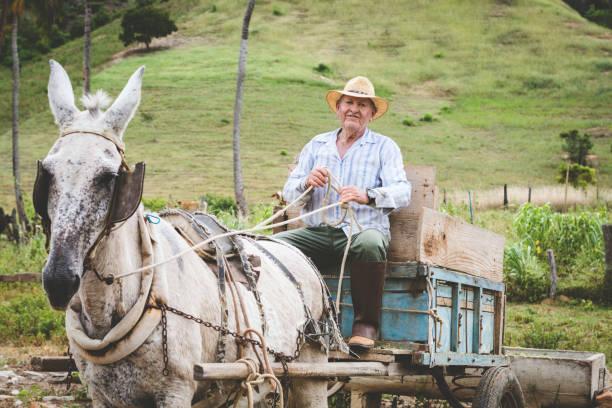 Senior farmer - Photo