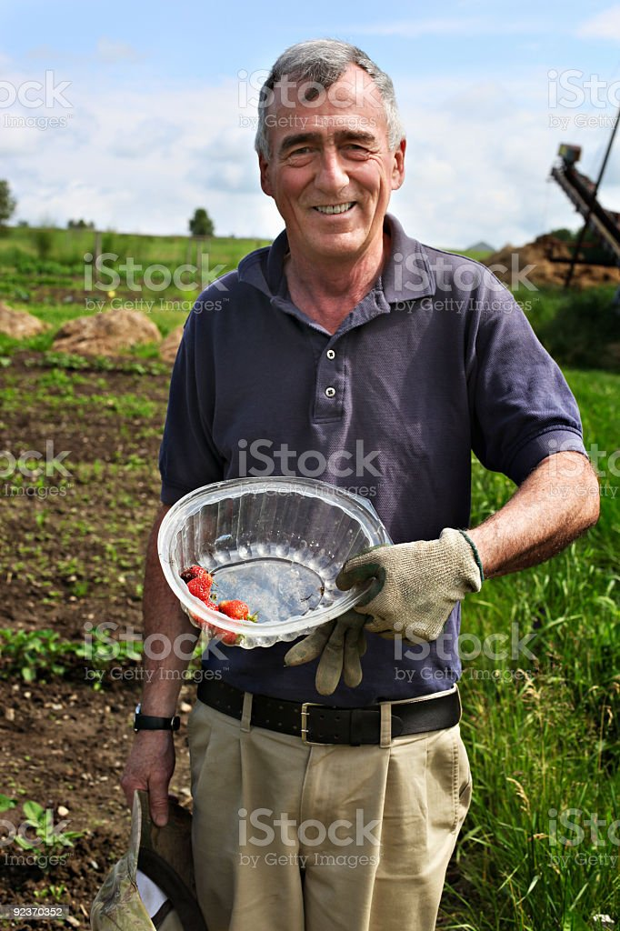 Senior farmer shows his first strawberries royalty-free stock photo