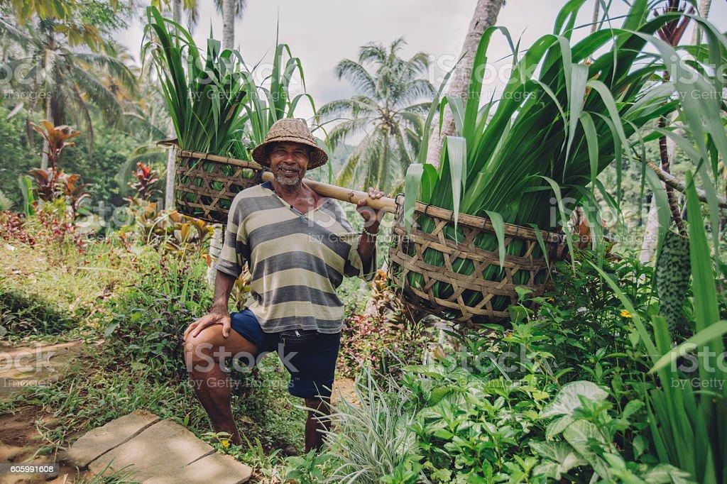 Senior farmer smiling working in his farm stock photo