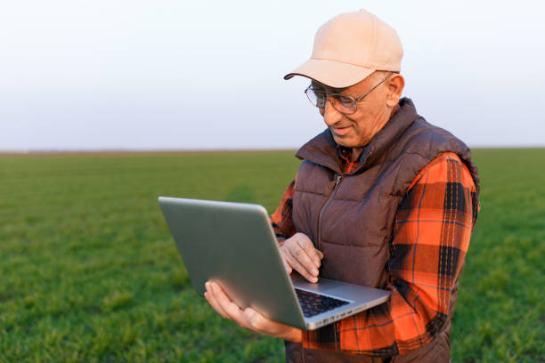 Senior farmer standing in young wheat field examining crop and looking at laptop. Senior farmer standing in young wheat field examining crop and looking at laptop. rancher stock pictures, royalty-free photos & images