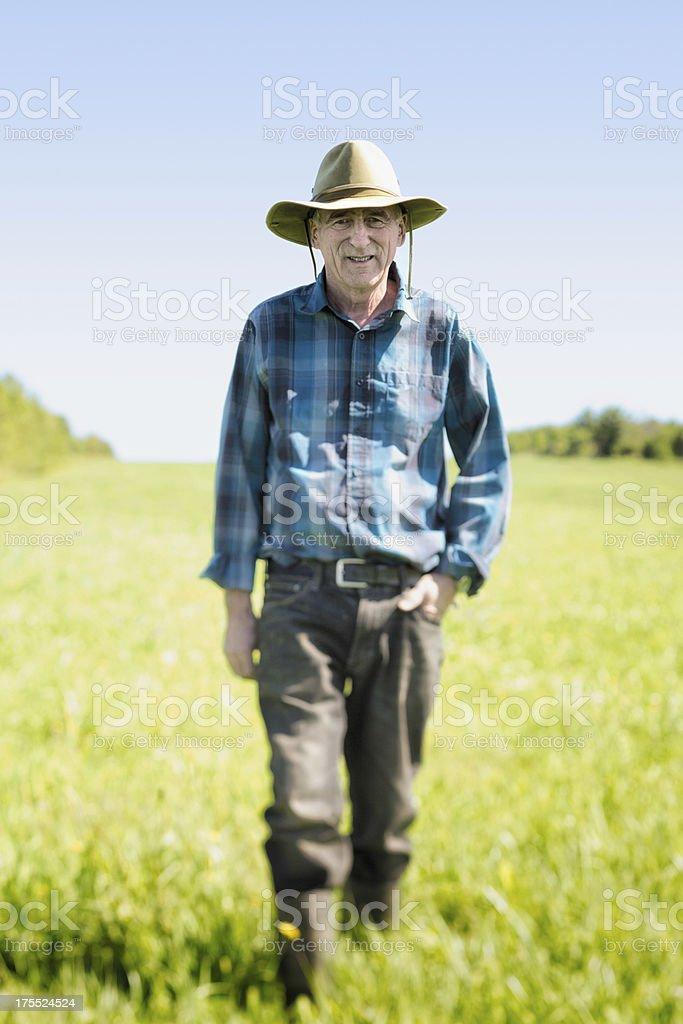Senior farmer walking in field stock photo