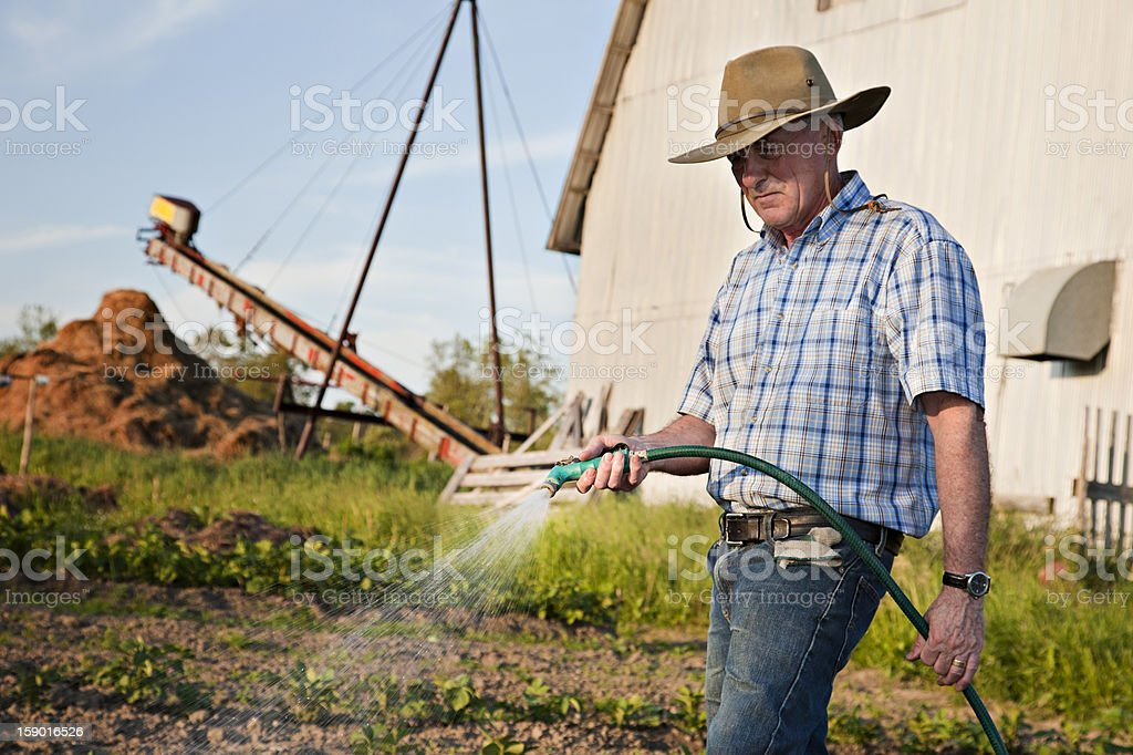 Senior farmer watering his vegetable garden stock photo