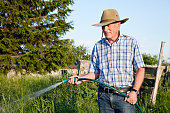 Senior farmer wearing a cowboy hat watering with a hose in a late evening light.