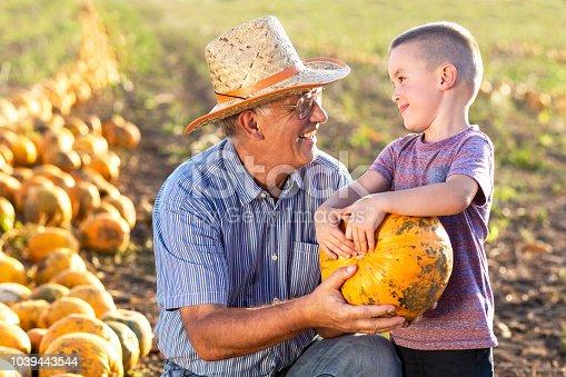 Senior farmer with his grandson examining pumpkin in field.