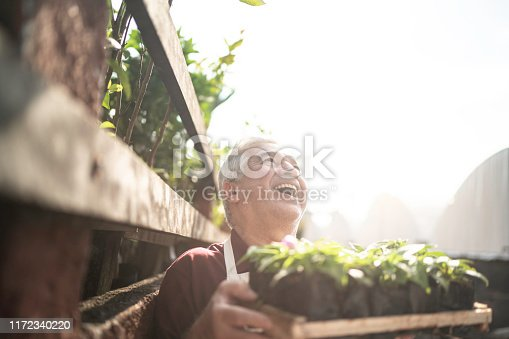 Senior florist holding a box full of seedlings, looking up