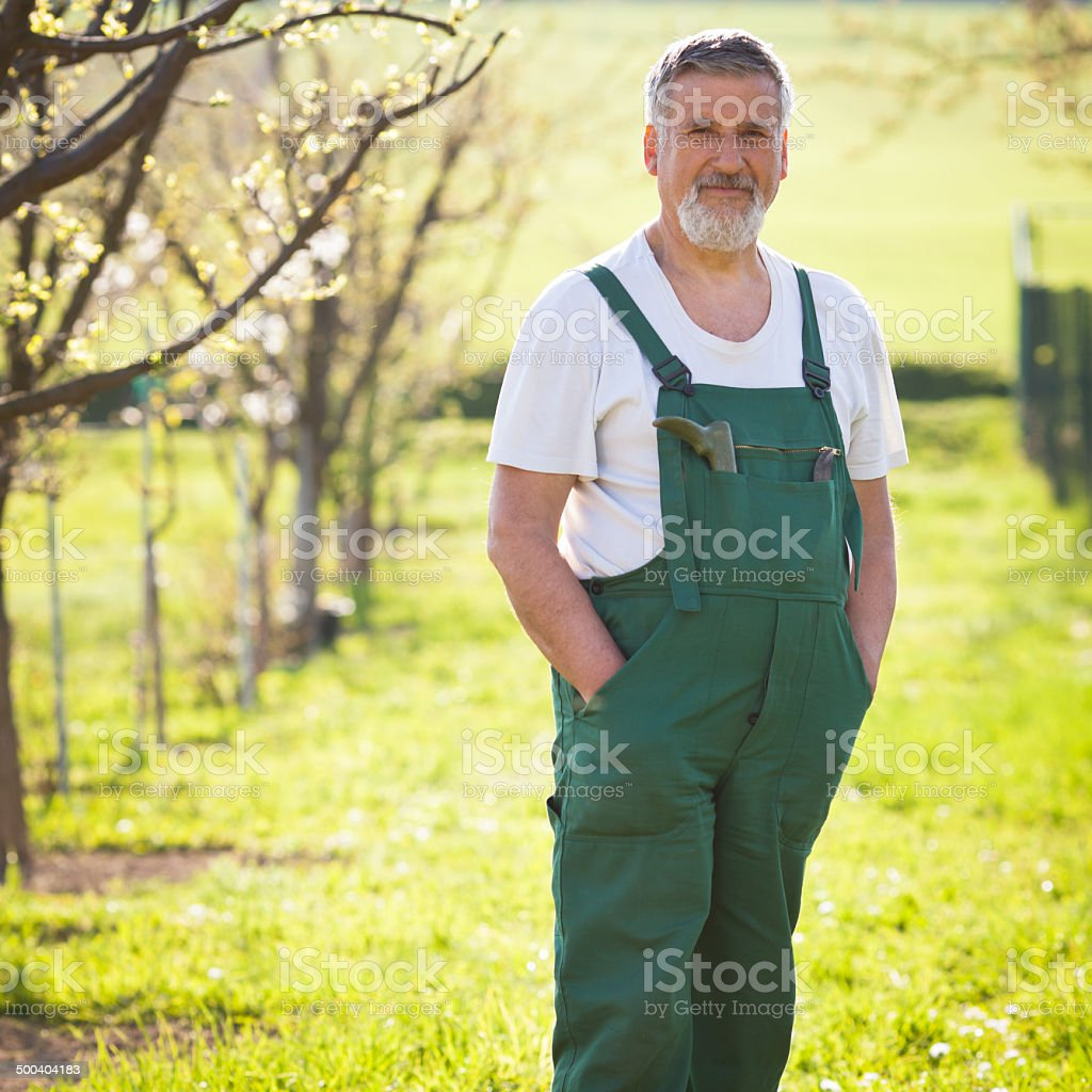 Senior gardener in his garden stock photo