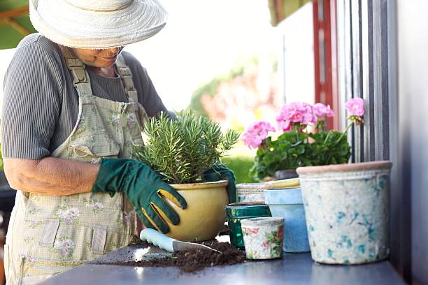Senior gardener potting young plants in pots Senior female gardener planting new plant in terracotta pots on a counter in backyard potting stock pictures, royalty-free photos & images