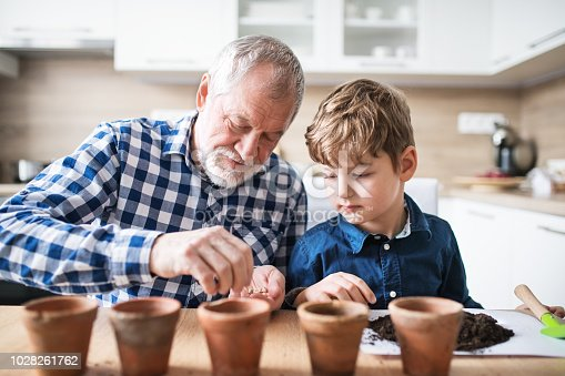 A small boy and an old man holding seeds in hands. Gardening concept.