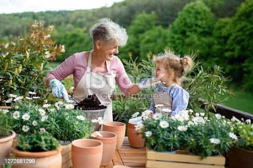 Happy senior grandmother with small granddaughter gardening on balcony in summer.