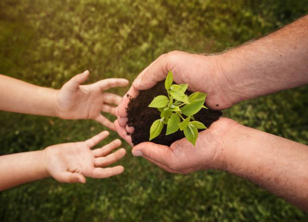 senior handen geven kleine plant aan een kind - herbebossing stockfoto's en -beelden