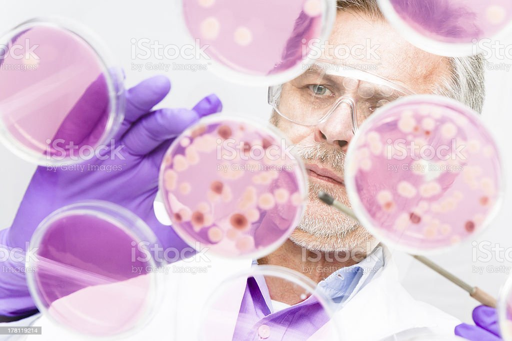 Senior life science researcher. Lizenzfreies stock-foto