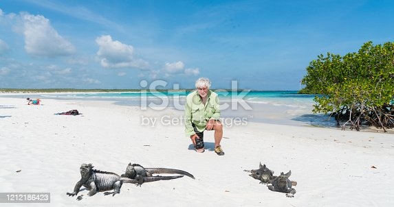 Senior man looking at Marine iguanas walking by on white sandy beach. This is Tortuga bay beach, one of few open beaches on Santa Cruz island for public.