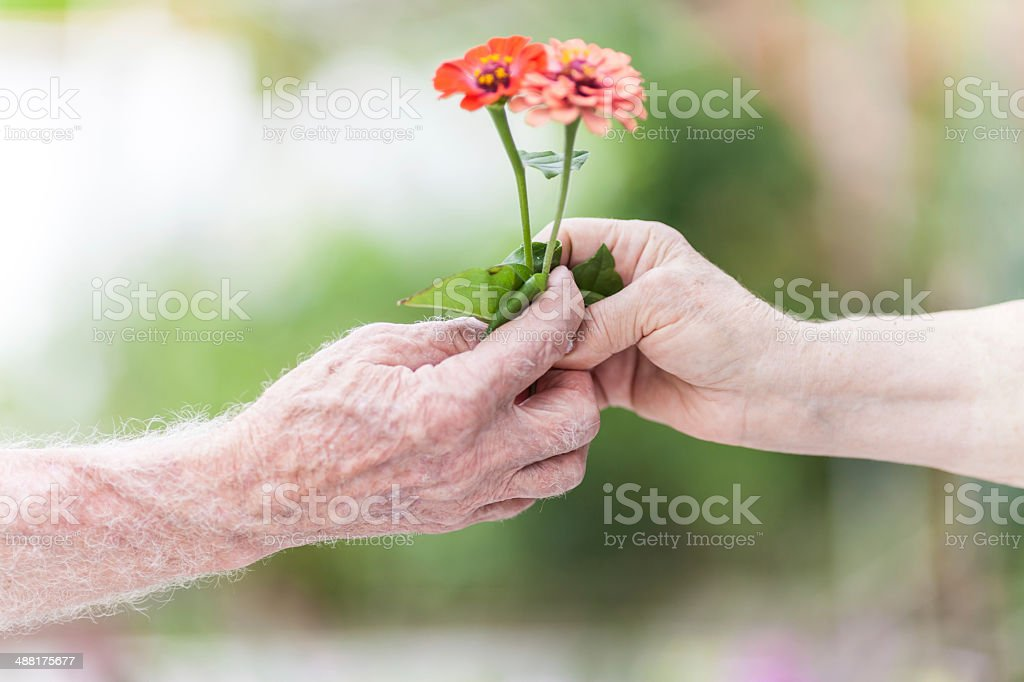 Senior Love stock photo