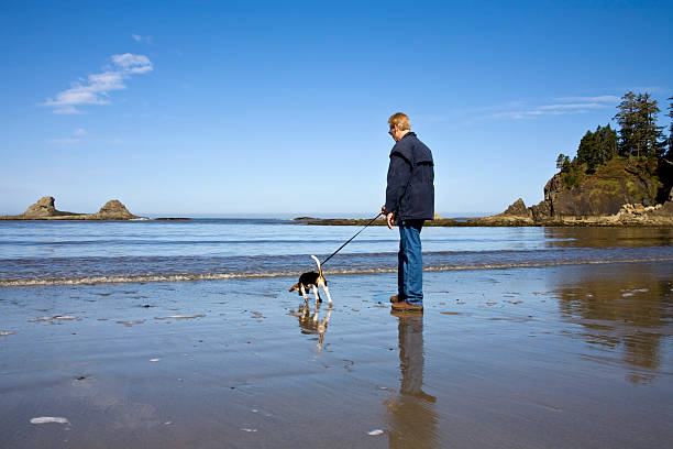 Senior man and beagle dog picture id146802533?b=1&k=6&m=146802533&s=612x612&w=0&h=r9lbj3slhk6iemrtumyca7ptwhgi8o1qz7hptauyvtk=