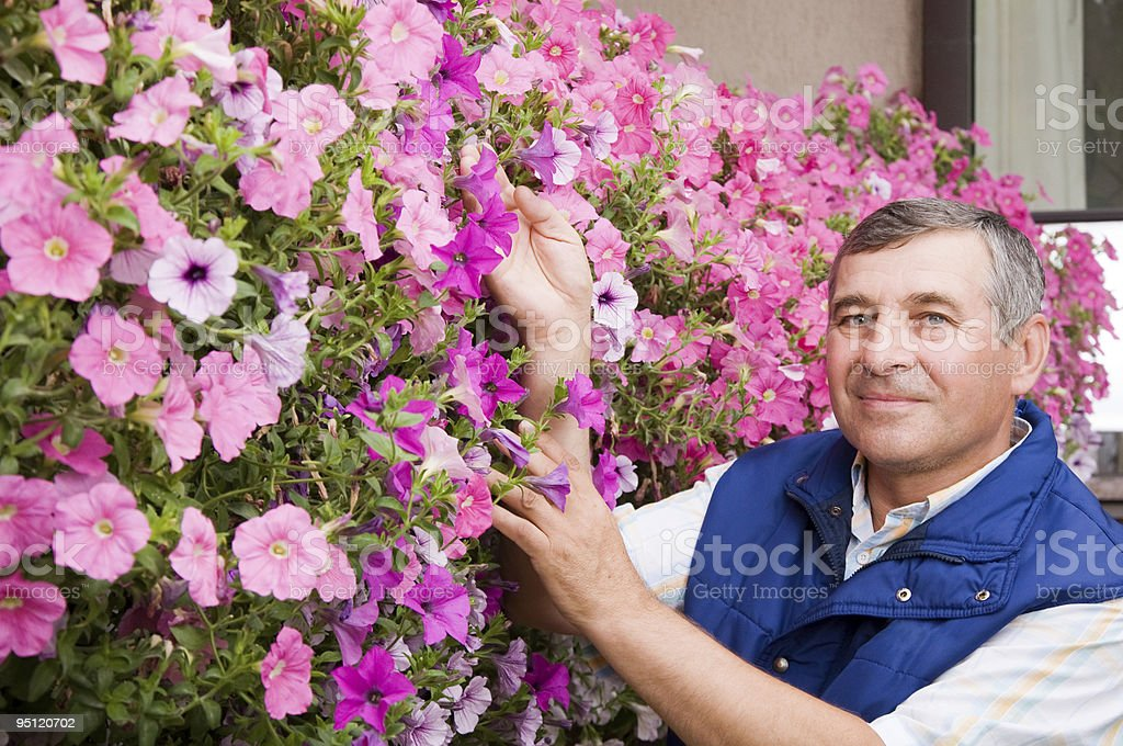 Senior man florist working in the garden royalty-free stock photo