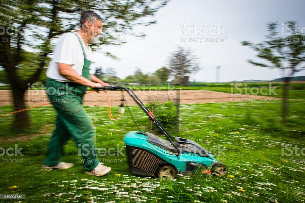 Senior man gardening in his garden (color toned image) stock photo