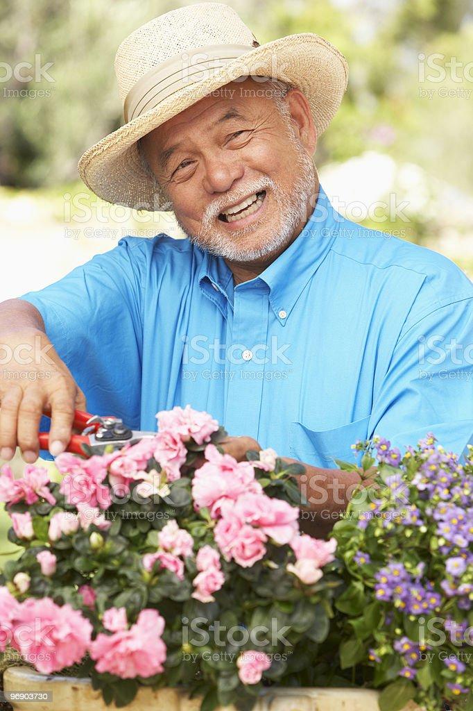 Senior Man Gardening royalty-free stock photo
