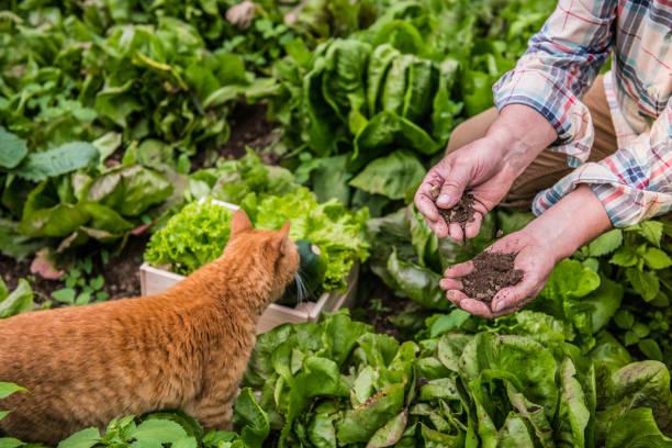 Senior man gardening soil in hands picture id1096571424?b=1&k=6&m=1096571424&s=612x612&w=0&h=vpyxugsym8kn y catosjwsdj waogdqat 1brna r4=