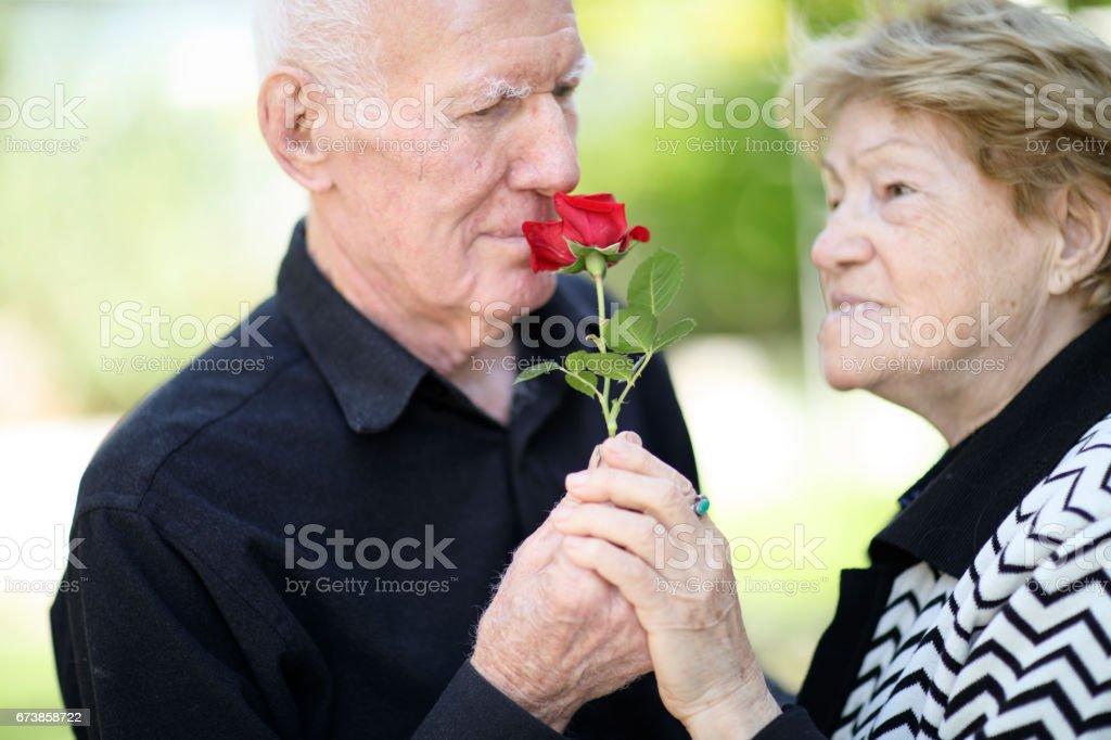 Senior homme donnant rose photo libre de droits