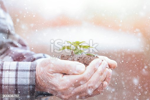621615390istockphoto Senior man hands holding new growth plant 900636752