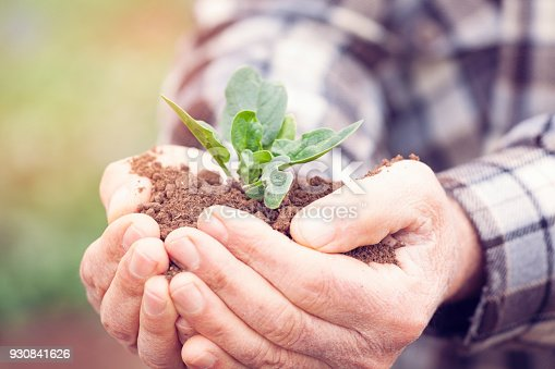 621615390istockphoto Senior man hands holding new growth plant 930841626