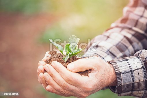 621615390istockphoto Senior man hands holding new growth plant 930841884