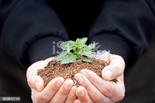 621615390istockphoto Senior man hands holding new growth plant 930844744