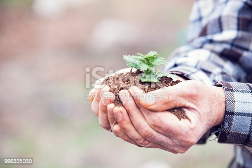621615390istockphoto Senior man hands holding new growth plant 996335030