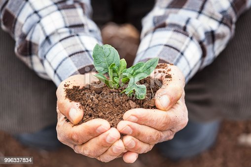 621615390istockphoto Senior man hands holding new growth plant 996337834