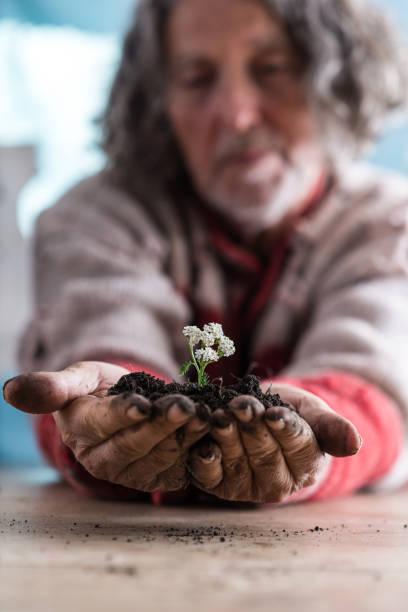 Senior man holding a dainty flower in rich soil stock photo