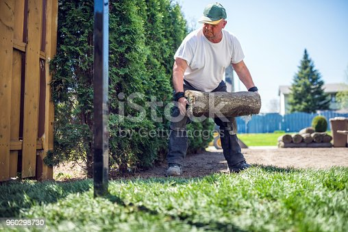 Senior man laying sod for new lawn