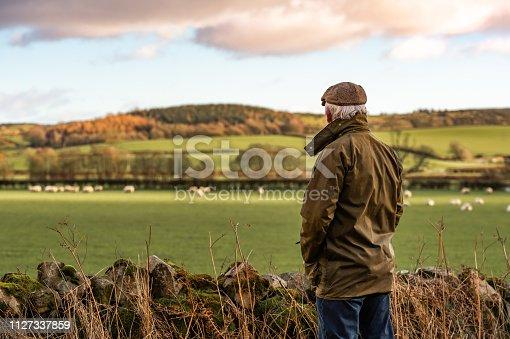 istock Senior man looking at field with sheep 1127337859