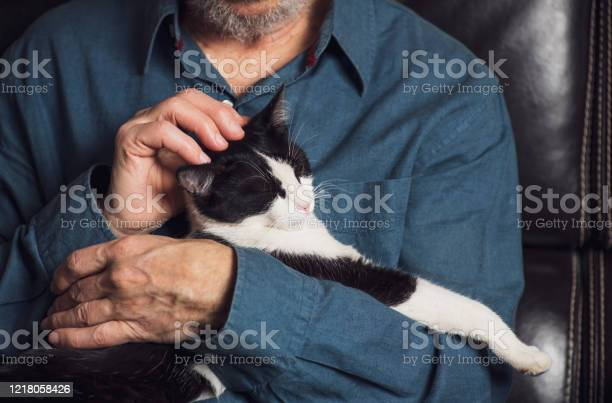 Senior man petting his cat on a sofa picture id1218058426?b=1&k=6&m=1218058426&s=612x612&h= trwxdseiegkbdkr o dxaen2m7cwnd3vr2osh isqe=