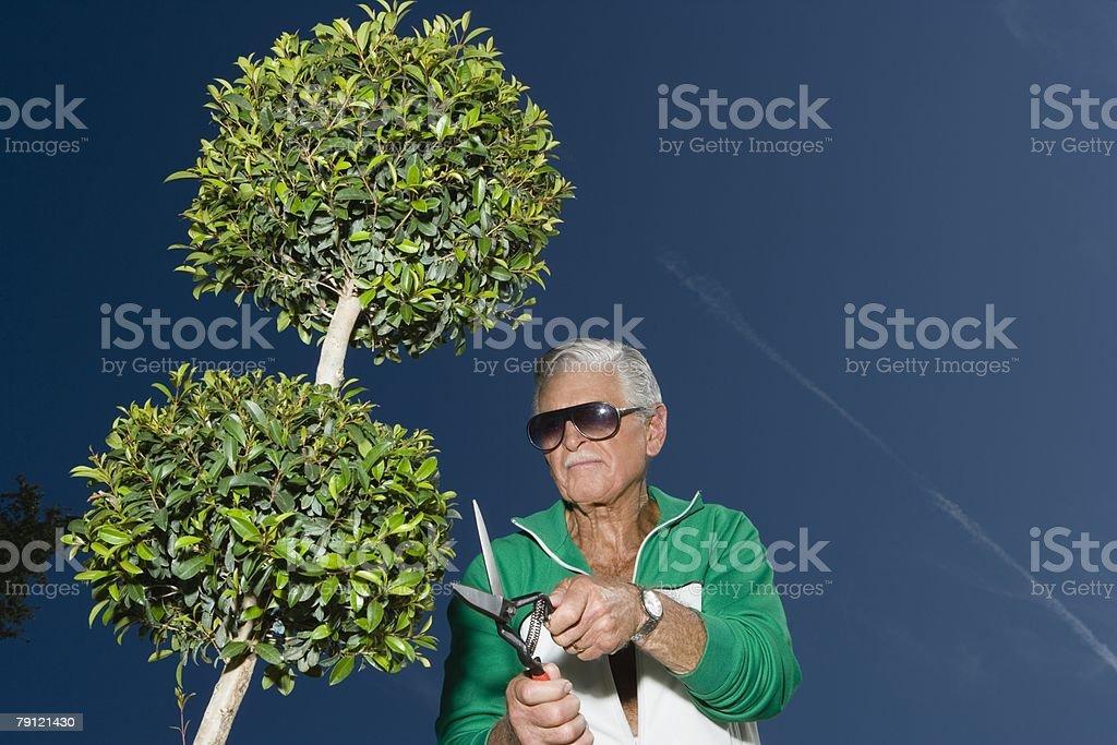 Senior man pruning tree royalty-free stock photo