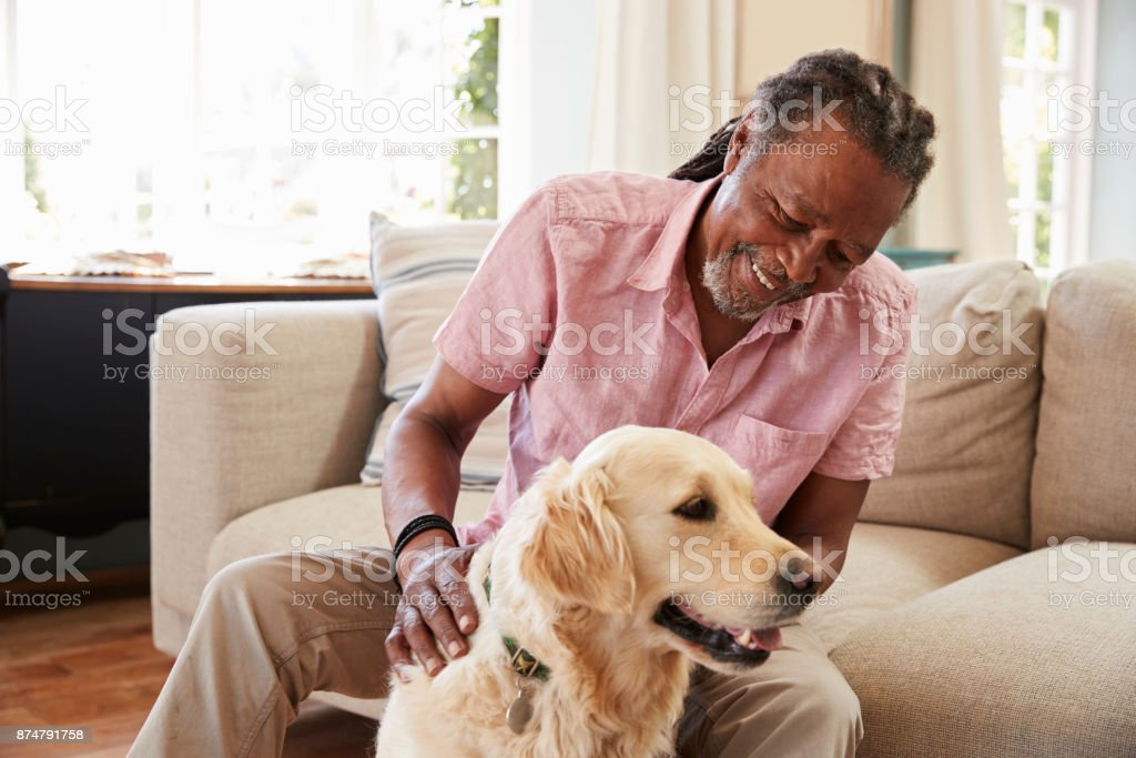 Senior Man Sitting On Sofa At Home With Pet Labrador Dog stock photo