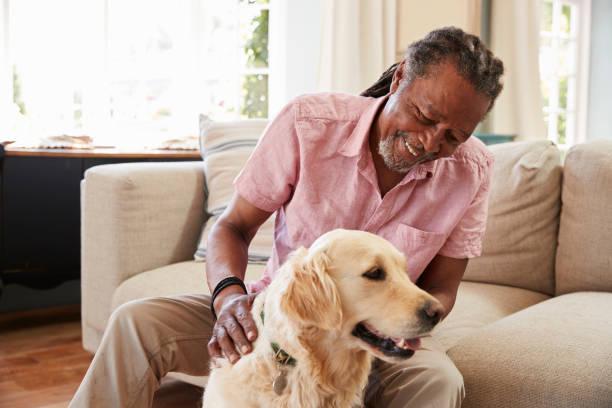 Senior Man Sitting On Sofa At Home With Pet Labrador Dog stock photo