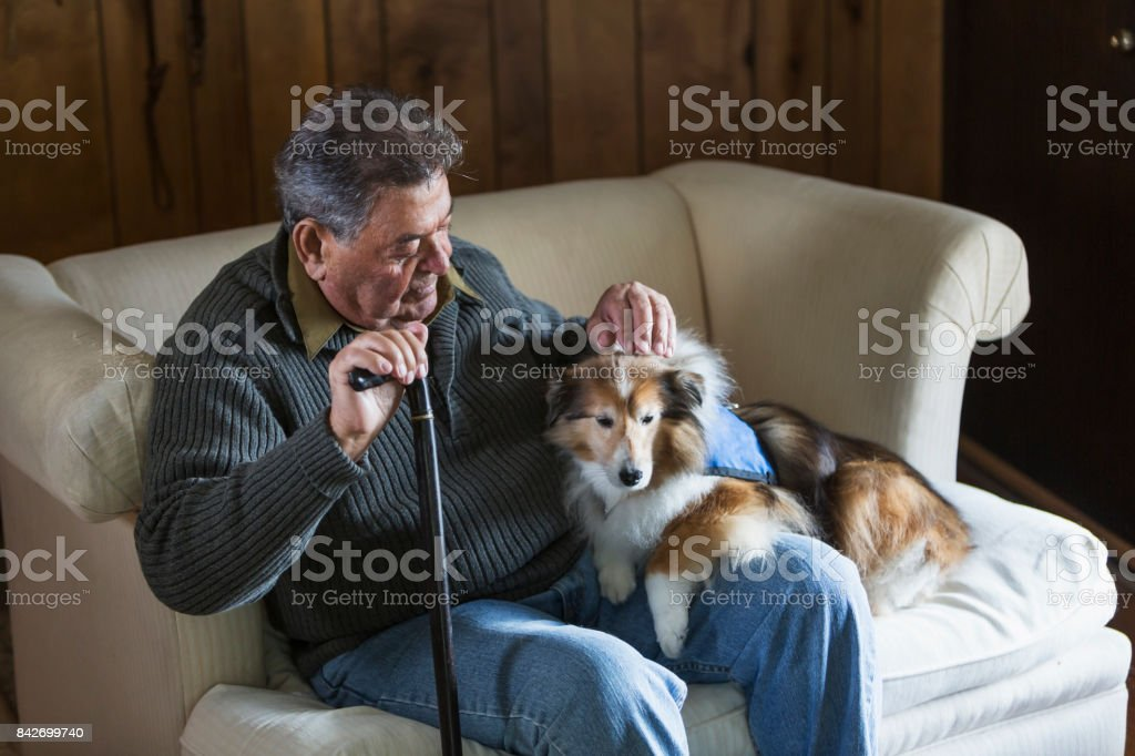 Senior man sitting with his therapy dog stock photo