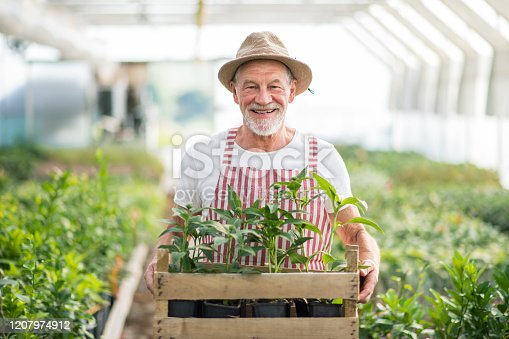 istock Senior man standing in greenhouse, holding a box with plants. 1207974912