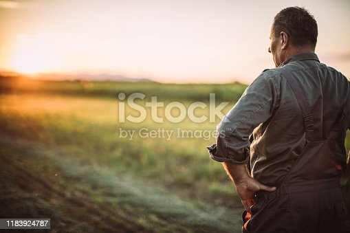 Senior man standing on the farm and looking at the field