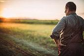 istock Senior man standing on the farm 1183924787