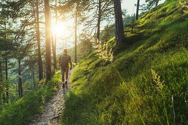 sendero para hombres mayores caminando en el bosque al atardecer - excursionismo fotografías e imágenes de stock