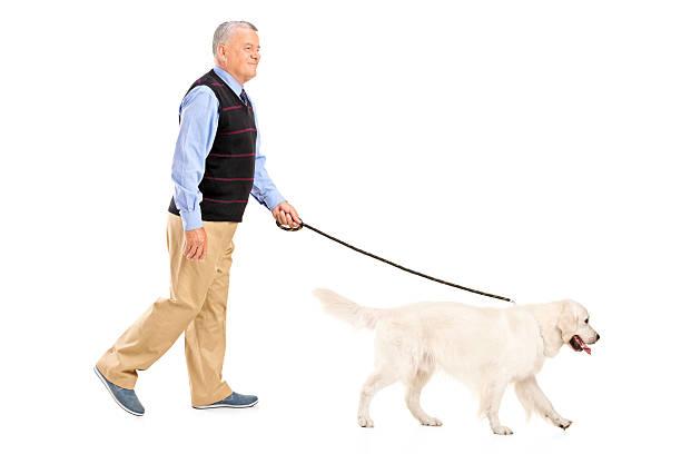 Senior man walking a dog picture id177419903?b=1&k=6&m=177419903&s=612x612&w=0&h=uaqjtm1vbzas lsj vvtzirxn9ox4tpqukfyu1jiwoa=