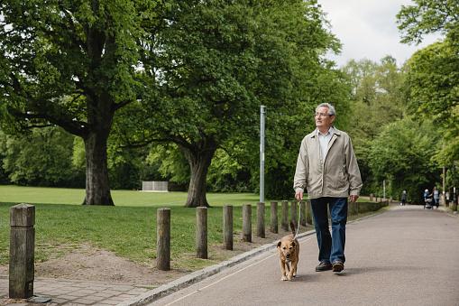 Senior Man Walking Dog in Park