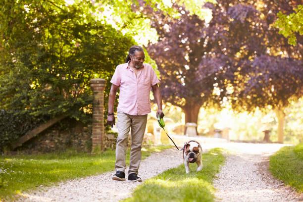 Senior man walking with pet bulldog in countryside picture id874819686?b=1&k=6&m=874819686&s=612x612&w=0&h=ssb3w4wkunsczlav2xhpi5mkm56dtenomgkufwo1t7g=