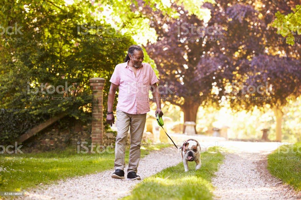 Senior Man Walking With Pet Bulldog In Countryside stock photo
