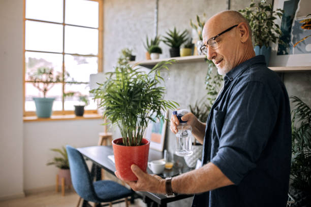 Senior man watering potted plants at home office stock photo